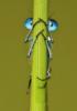 libelletje: (prjatki)