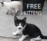 lastscorpion: (FREE KITTENS)