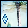 azurelunatic: Dragonfly and a runic sigil.  (dragonfly)