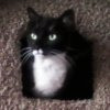 ysobel: Suri looking out from one of her perches (suri)