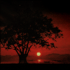 bookofgramarye: Image of spreading tree in sunset (Jigoku Shoujo: Sunset World)