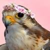 pastelfalcon: (Falcon)