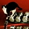 lizcommotion: cat standing on weights (cat)