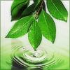 heartsong: (Zen Leaf)
