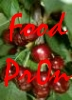 "azurelunatic: ""Food Pr0n"", cherries.  (food pr0n)"