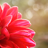 treasa: flower (tear you apart)