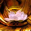 heartsong: (Lotus)