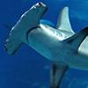 Sharktober