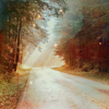 commonality: Us. picture of a road in a forest with light streaming down. (Default)