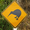 crazyscot: Roadsign warning of kiwis (kiwi)