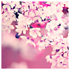 writerlibrarian: fruit tree in bloom (Default)