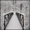 fleurrochard: A path in a winter forrest (winter)