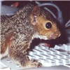 bursar42: (squirrel)