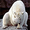 furr_a_bruin: (Bear: Oh No!)