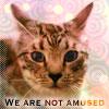owlmoose: (cats - tori glare)