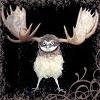 owlmoose: (owlmoose 2)