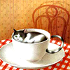 owlmoose: (cats - teacup)
