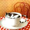 owlmoose: (cats - teacup)