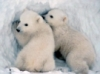 curious_reader: (polar bear cubs)