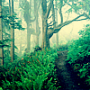 attie: A narrow path in the woods. (justpretty - woodland)