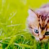 attie: A little kitty in the grass. (justpretty - kittie)
