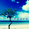 attie: A gnarly tree on a deserted beach. Peace. (justpretty - peace tree)
