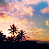 attie: Silhouette of palm trees against a multicolored sunset. (justpretty - palm trees)