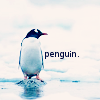 attie: A penguin with an auto-referential caption. (misc - penguin.)