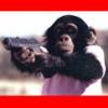 idontlikegravy: (monkey)