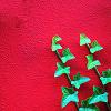 ivy: Two strands of ivy against a red wall (Default)