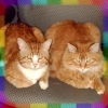rainbow: photo of my cats Jack and Casteylan (jack and cas)