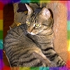 rainbow: photo of my late cat Mousebait on the cat tree (mousebait)