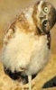 taiba: (сова в подозрении)