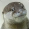 mistressjinx: otter pup (otter smirk)