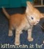 janissa11: (kitten!dean)