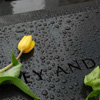 gen_is_gone: a yellow daffodil bud on the 9/ll memorial (in memoriam)