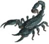 aaaaaaaagh_sky: A large black version of the North American emperor scorpion,. (radscorpion)