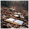 noctuary: (books)