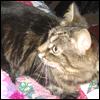 alyse: (kitties - jura)