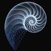 outlineofash: Digital rendering of a nautilus shell. (Sundry - Spiral)