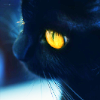 outlineofash: Close-up of a black cat with bright yellow eyes. (Sundry - Black Cat)