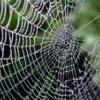 fawatson: (spiderweb)