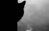 lialu: (кот)