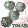 temve: Artichokes on a tea towel (Default)