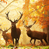 fyrdrakken: (Autumn deer)
