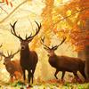 fyrdrakken: (Autumn deer)