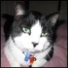 deird1: my cat Elf, looking sceptically at the camera (Elf)