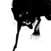 outlineofash: Artwork of a black wolf snarling. (RRH - Snarling Beast)