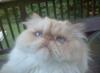 belairguy45: (pic#8355170)