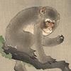ex_grievesmen567: (Monkeysage)